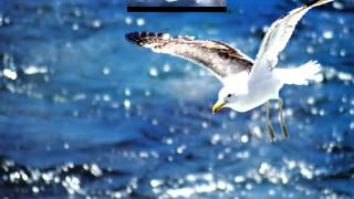Neil Diamond   Skybird  Jonathan  Livingston Seagull  HD