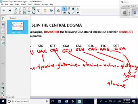 Entrance Slip The Central Dogma Say It With Dna Examples Youtube