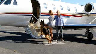 Airplane Companies Won t Allow Marine s Huge Dogs on Plane Heiress Charters Private Jet