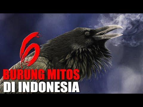MISTIS!!! INILAH 6 BURUNG PENUH MITOS YANG ADA DI INDONESIA