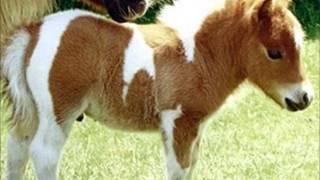 Petit poney Remix 2014