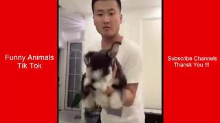 Funny Animals : Tik Tok Cute #7