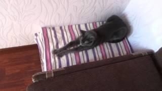 Кошка сидит как сфинкс неподвижно.