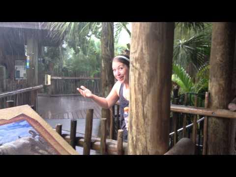 Rainy trip to the zoo. Brevard Zoo, FL