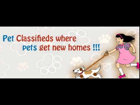 Free Pets Classifieds- PetsAds.net