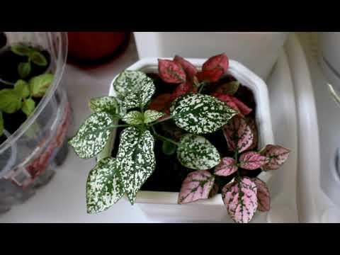 Комнатные растения из семян. Какие стоит выращивать. [Надежда и мир]