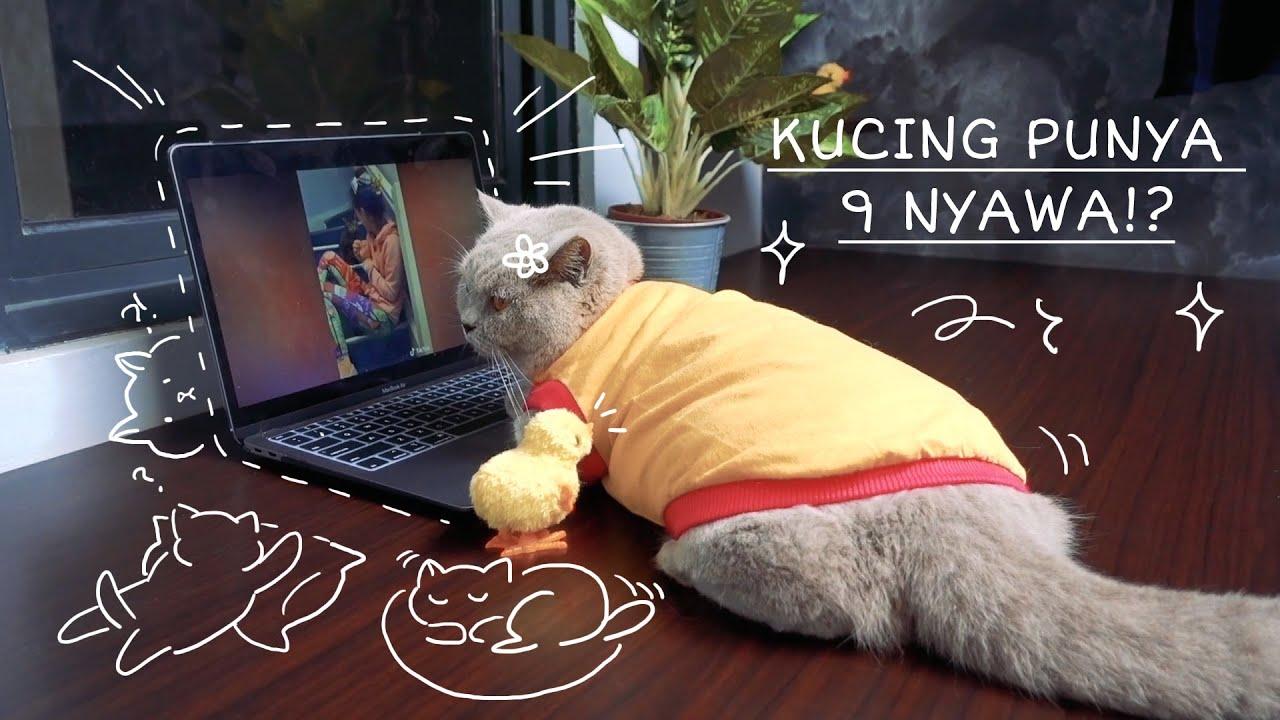 Kucing Punya 9 Nyawa? Masa Sih? Cia Cat Diary