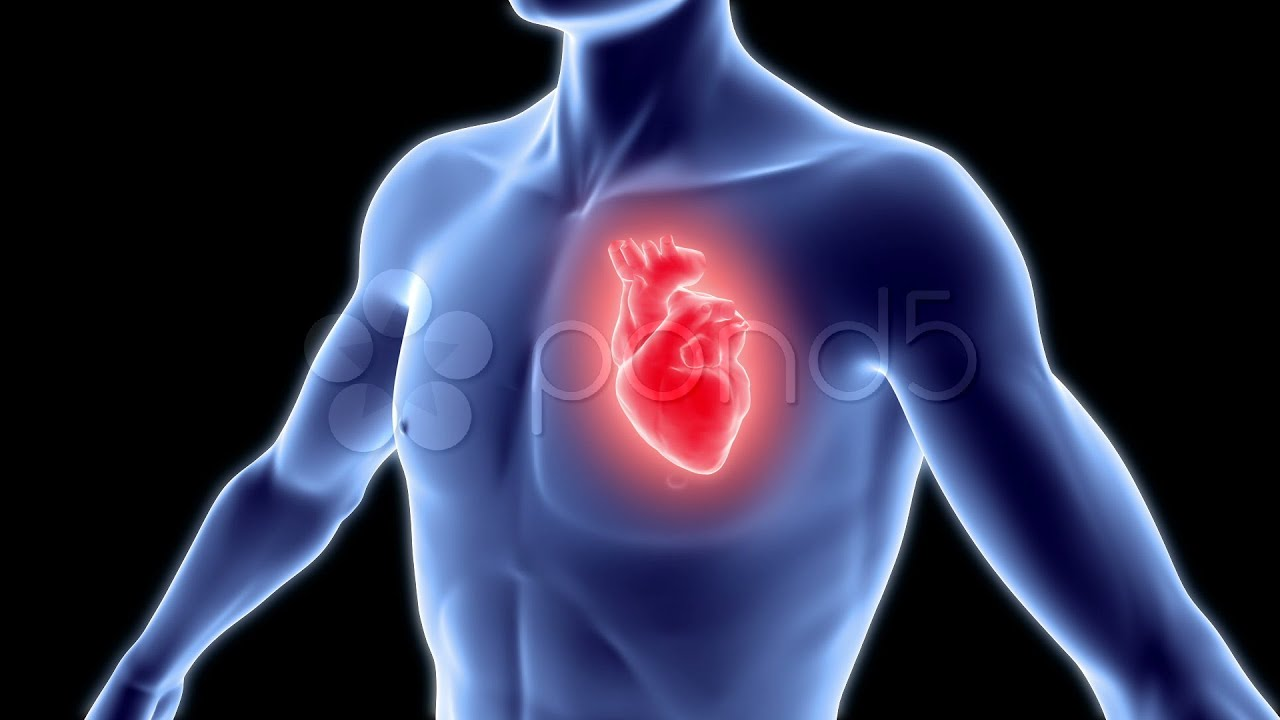 Human Body With Heart. Stock Footage - YouTube