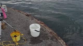 2019年10月17日10時59分 大阪湾 関西製糖 公衆トイレ前 ツバス釣りの様子1