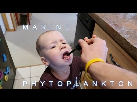 MARINE PHYTOPLANKTON: The BaSis of All LiFE