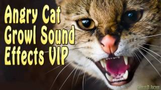 Angry CAT Growl Sound Effects [High Quality 2016]
