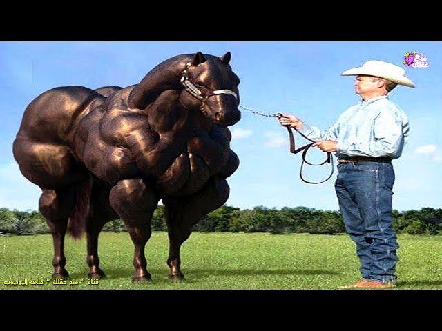 أغرب سلالات وأنواع الخيول فى العالم !