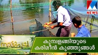 Karimeen Nursury | Manorama News | Nattupacha