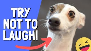 Try Not To Laugh Impossible #6 FUNNY CATS DOGS FAILS Compilation 2019  - viral animal videos 2019