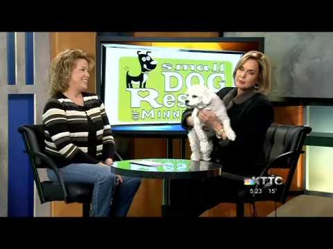 Bailey on KTTC TV for Small Dog Rescue