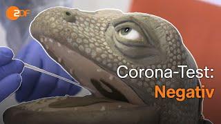 Exkursion ins Corona-Labor – Die Echse in der Welt der Viren