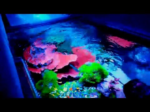 (WATER FLOW) more important than lighting? IN A REEF TANK
