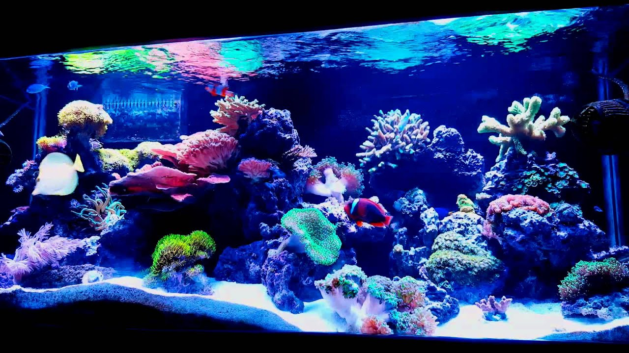 (WATER FLOW) more important than lighting? IN A REEF TANK & WATER FLOW) more important than lighting? IN A REEF TANK - YouTube azcodes.com