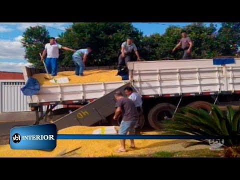 Polícia apreende nove toneladas de maconha na região de Prudente