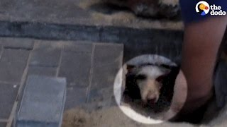 Dog Trapped Under The Sidewalk Cries Until Help Arrives