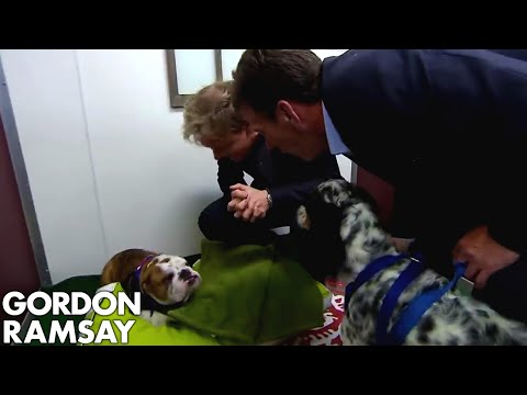 Gordon Brings His Own Dog to Stay at the Hotel! | Hotel Hell