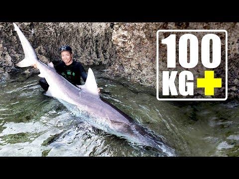 磯から100kg超えの巨大サメを釣り上げ、命がけのタッチ・アンド・リリース!【100kg Shark fishing on  Shore】【ENG SUBS】