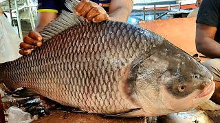 Amazing HUGE CATLA CARP FISH Cutting Chopping Live In Fish Market Fish Cutting Skills