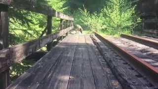 Jamaica The German Shepherd At Big Baldwin Trestle, Oregon