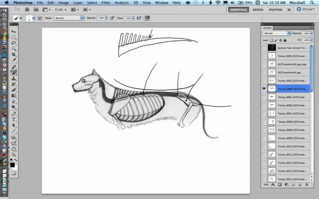 Drawing Animal Anatomy: Spine & Torso - YouTube