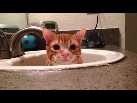 Most Hilarious Spy Cat Of You Tube Now Found!