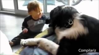 Собака друг человека  подборка видео