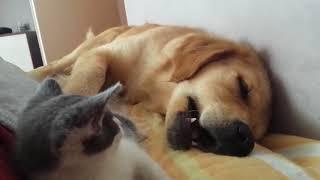 犬、食べちゃいました。子猫盛大に犬を食す。