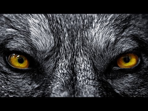 Red Shadow Singers - Wolf Song