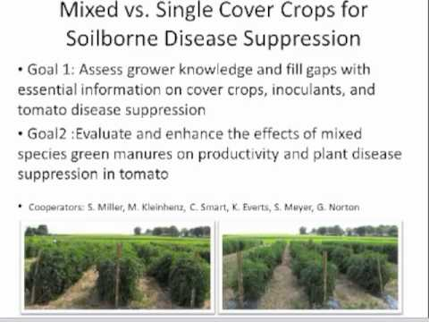 The Role of Cover Crops in Organic Transitions Webinar
