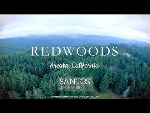 Redwoods - Arcata, California