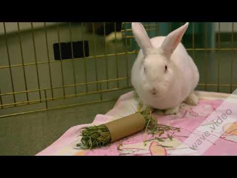 5 best animals you needas a pet youtube