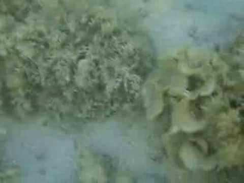 Schnorcheln im Roten Meer - Hurghadaиз YouTube · Длительность: 2 мин11 с