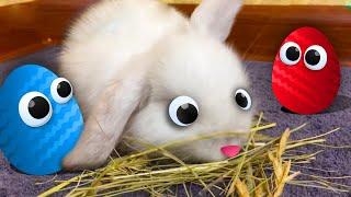 Кролик НОЛИК и Яйцо Сюрприз. Обзор на игрушки Барбоскины для детей