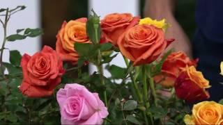 Cottage Farms 2-pc Multicolor Rio Samba Rose on QVC