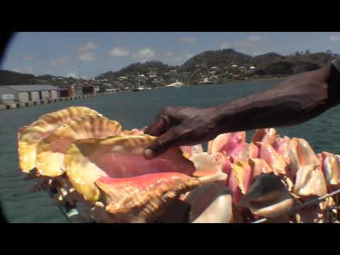 LAMBI SHELL / CONCH SHELL FOR SALE IN GRENADA  2014 TOWN TOUCH-UP TV HD VIDEOS