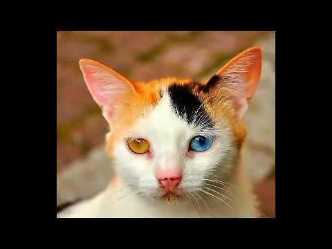 Images de chats drôle et mignon - YouTube