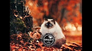 HARDSTYLE IS MY STYLE (2017 AUTUMN POPULAR MAINSTREAM COMMERCIAL & EUPHORIC SONGS MIX) #3