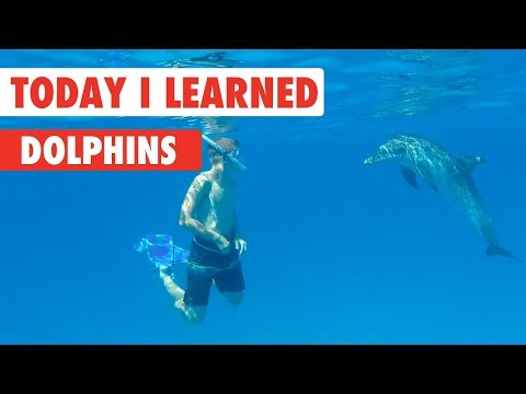 Today I Learned: Dolphins