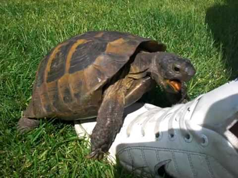 Turtle Sex With A Shoe