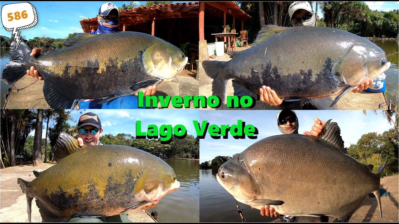 Lago Verde - Grandes peixes na superfície em Goiânia - Programa 586