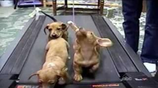Cute Dogs (Americas Funniest Home Videos / AFV)