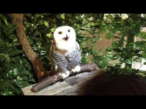 Owl Zoo in Kyoto