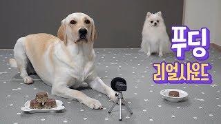 Beef Pudding Real Sound 👀 Sonyeo & HaengSung eat together ★ Dog ASMR