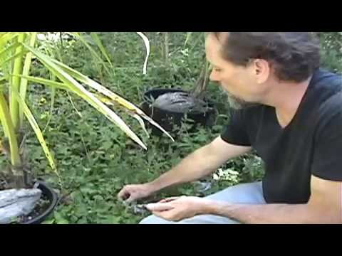 Savage in the Wild: Episode 18 - Hawaiian Plant Class