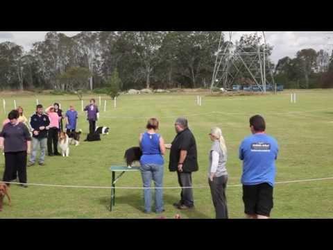 Eric Salas All Breed Handling Workshop in Australia